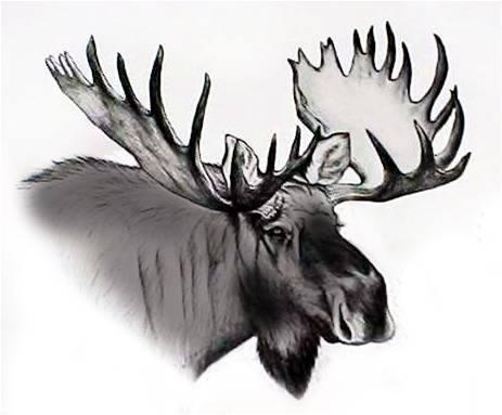 Moose Lodge #2426 | Birch Run CVB